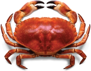 610-465_Crab.whole_crab