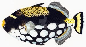 balistoides_conspicillum__clown_triggerfish_by_rinus61-d4n90e7