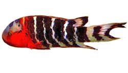 FishBreed_2_539_1
