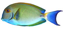 FishBreed_2_295_1