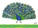 eric-carles-peacock_ni2618_1