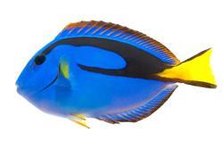FishBreed_2_310_1