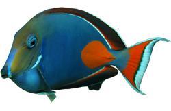 FishBreed_2_73_1