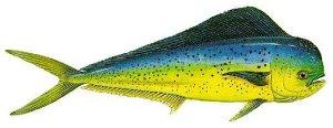 mahimahifish