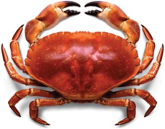 crab-images-11