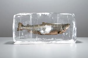 Salmon inside ice block