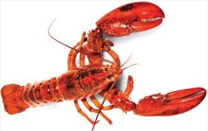 lobster-dream